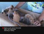 VM54超音波を用いた肝臓の検査